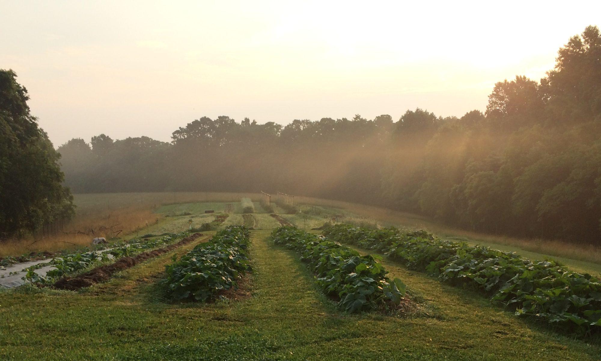 new ground farm